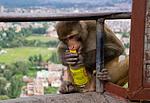 Nepál, Káthmándú, Swayambhunath, opice
