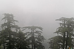 Indie - mlha v Shimle