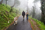 Indie - turistické telátko Johann