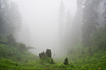 Indie - mlha cestou na Hatu Peak