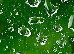 Fotografie 1 - Kapky vody na pavučině