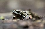 Vršatská bradla - žába