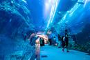 Akvárium v Dubai Mall (2)