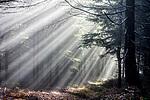 Paprsky slunce v lese