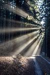 Paprsky slunce na lesní cestě