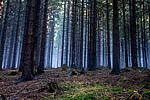 Beskydský les